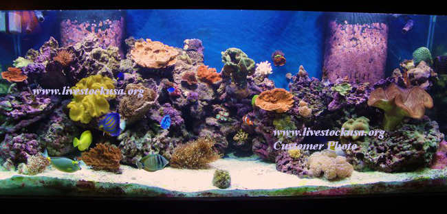 Live rock marine aquarium 1000 aquarium ideas for How much is a fish tank
