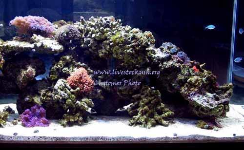 Marine Aquarium - Reef Tank - Customer Photos - Live Rock - Aquascapes