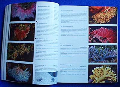 Coral Reef Animals of the Indo-Pacific