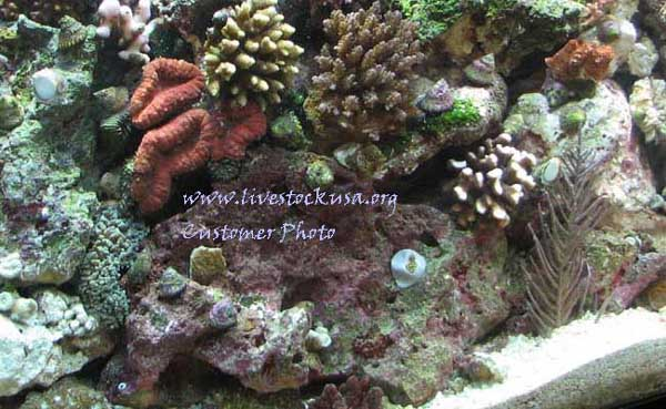 Tonga Corals in a Customer's Tank