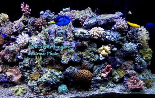 Live Reef Rock : Marine Aquarium - Reef Tank - Customer Photos - Live Rock - Aquascapes