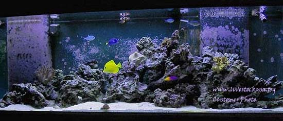 Marine Aquarium Reef Tank Customer Photos Live Rock Aquascapes