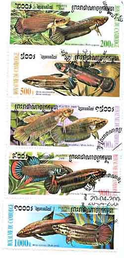 Marine fish freshwater fish stamp collecting topicals for Rare types of betta fish