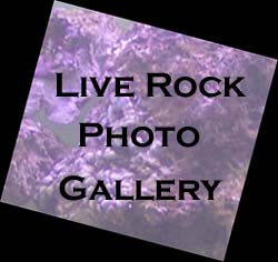 Live Rock Gallery