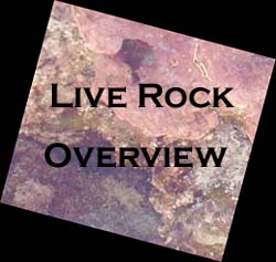 Live Rock Overview